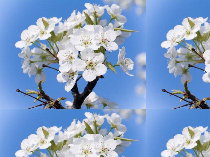 Vinylová Tapeta Dřín v květu - Stromy