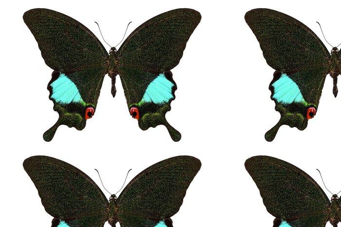 Tapeta Pixerstick Druhů motýlů Papilio Karna Karna - Ostatní Ostatní