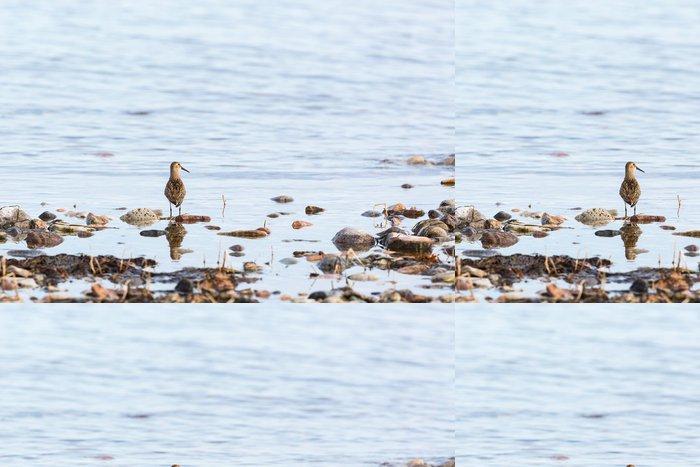 Tapeta Pixerstick Dunlin pták - Ptáci