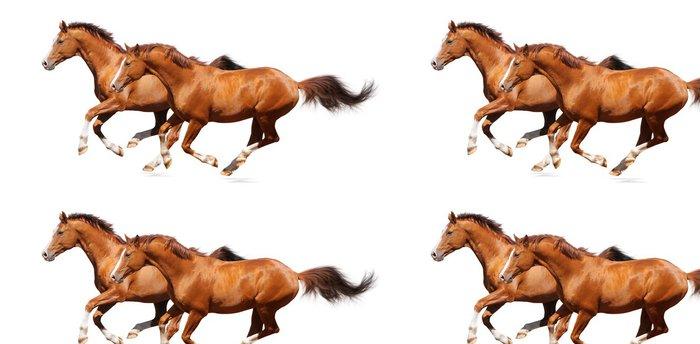 Tapeta Pixerstick Dva šťovík koně cval - Nálepka na stěny