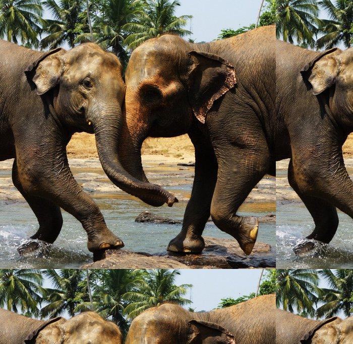 Tapeta Pixerstick Dva velké divoké slonů indických společně jedno-jedno - Úspěch