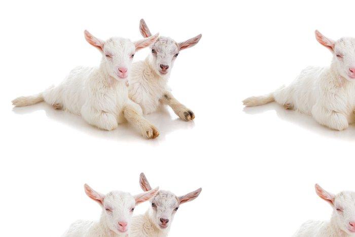 Tapeta Pixerstick Dvě děti na kozy, izolované - Savci