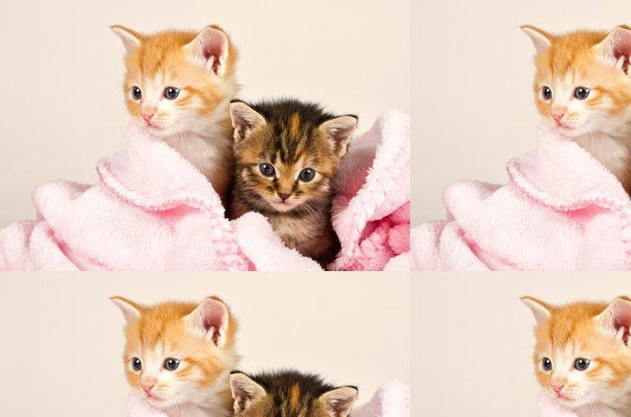 Vinylová Tapeta Dvě koťata v růžové deky - Témata