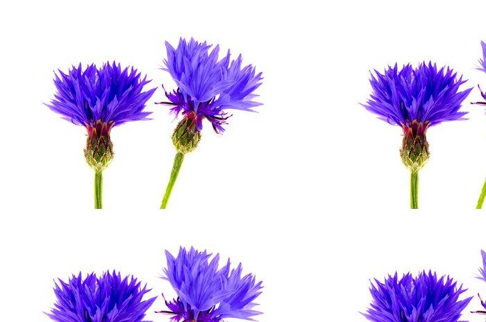 Tapeta Pixerstick Dvě krásné modré květy chrpa na bílém - Květiny