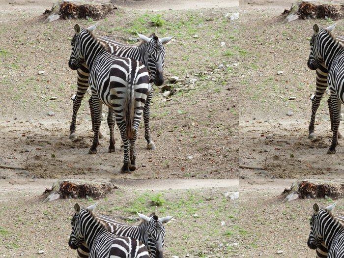 Tapeta Pixerstick Dvě zebry stojí bok po boku - Témata