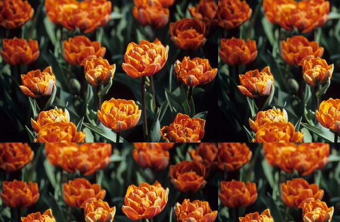 Tapeta Pixerstick Dvojité oranžové tulipány - Domov a zahrada