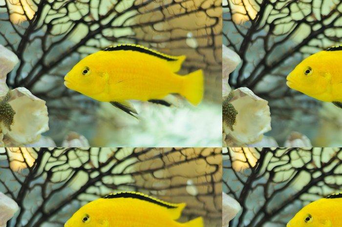 Tapeta Pixerstick Electric Yellow Cichlid Ryby v akváriu - Vodní a mořský život