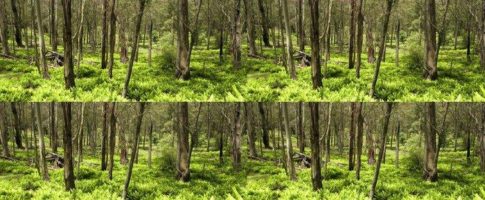 Vinylová Tapeta Eukalyptový les a kapradí listí - Lesy