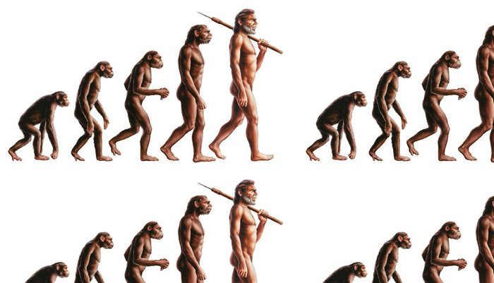 Tapeta Pixerstick Evoluce - Jiné