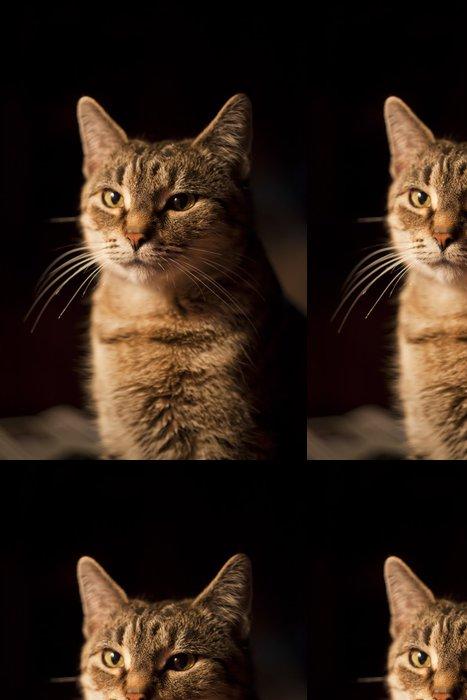 Vinylová Tapeta Evropská kočka - Savci