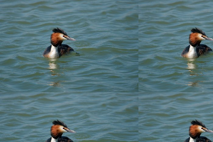 Tapeta Pixerstick Exotické potápka na modré moře - Ptáci