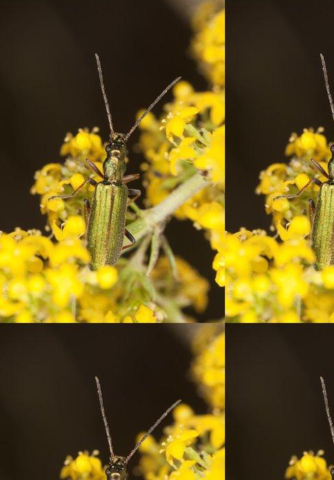 Tapeta Pixerstick False puchýřník (Chrystanthia geniculata) - Zvířata