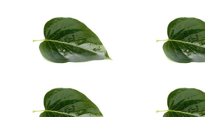 Tapeta Pixerstick Feuille verte tombée d'un arbre détourée - Roční období