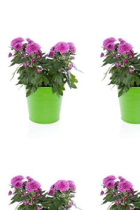 Tapeta Pixerstick Fialová chrysant DAISIE rostlin zelená květináč - Květiny