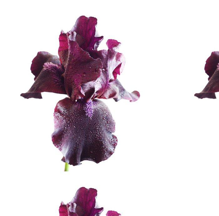 Tapeta Pixerstick Fialová iris - Roční období