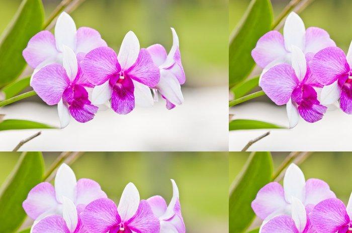 Tapeta Pixerstick Fialová orchidej na zeleném pozadí - Květiny