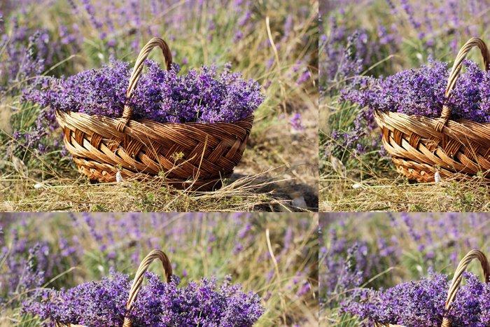 Tapeta Pixerstick Fialová pole květy levandulové - Venkov