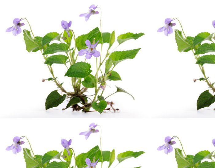Tapeta Pixerstick Fialová rostlina - Květiny