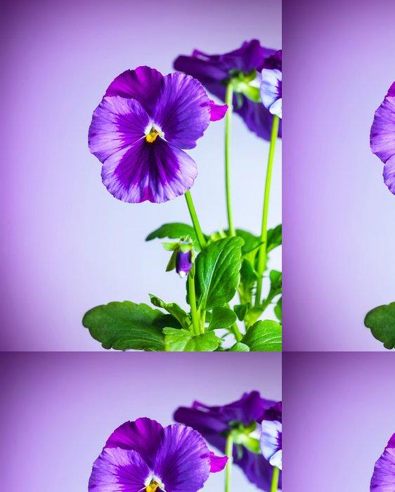 Tapeta Pixerstick Fialové květy maceška - Květiny