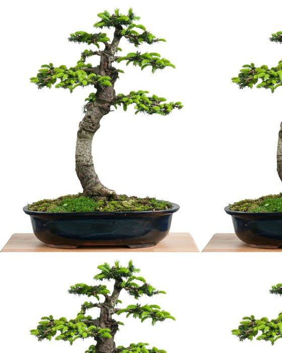 Tapeta Pixerstick Fichte (Picea orientalis) als Bonsai Baum - Domov a zahrada
