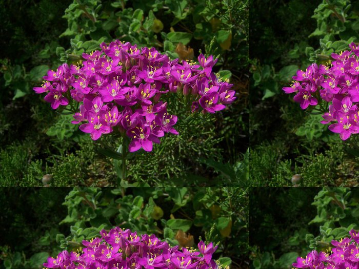 Tapeta Pixerstick Fiori Fucsia - Květiny