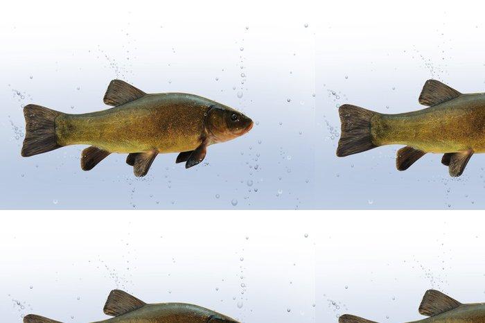Tapeta Pixerstick Fische 28 - Vodní a mořský život