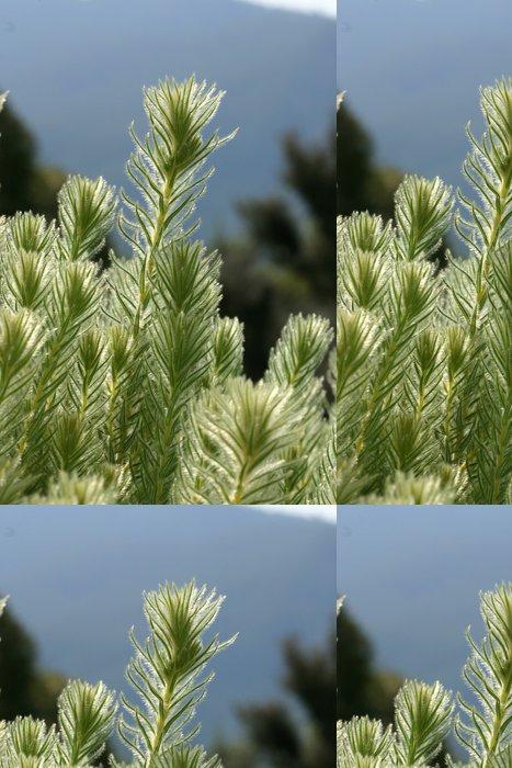 Tapeta Pixerstick Flanel Bush má jemné hairlike listy. Podsvícení sluncem - Rostliny