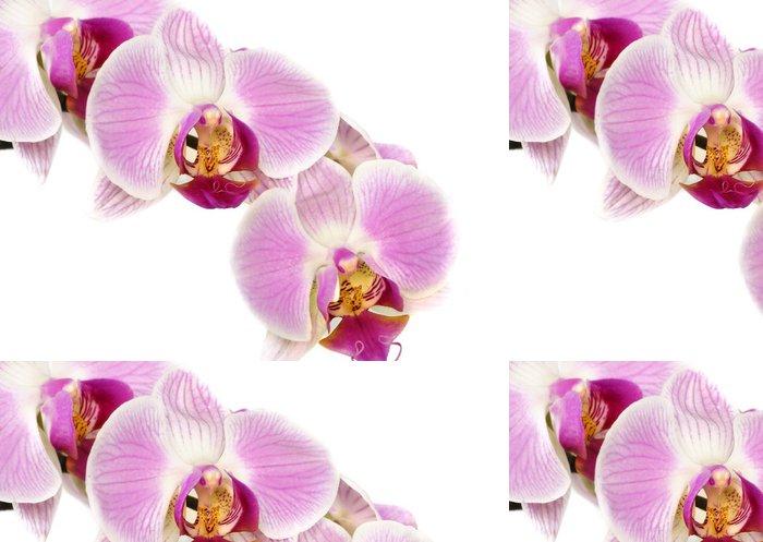 Tapeta Pixerstick Fleur - Květiny