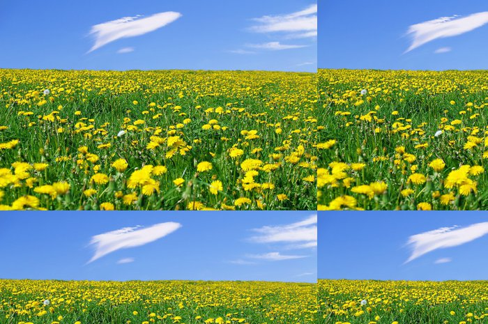 Vinylová Tapeta Flores Amarillas en la Pradera - Květiny