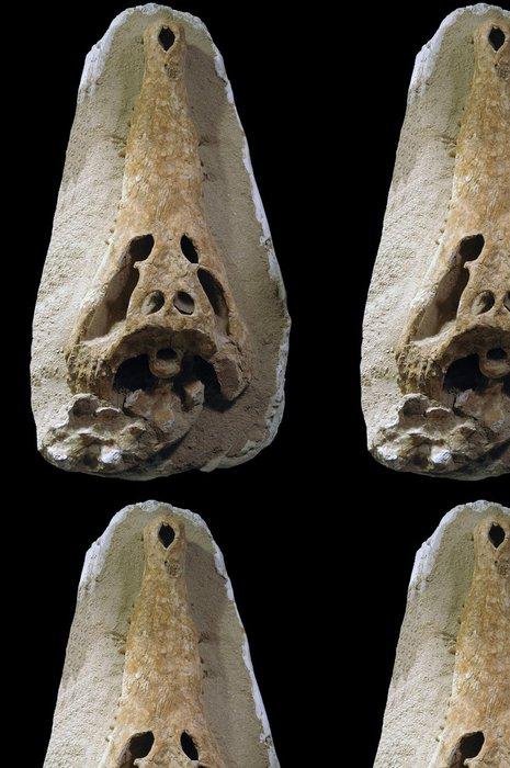 Vinylová Tapeta Fossiles, minéraux, sbírky - Imaginární zvířata
