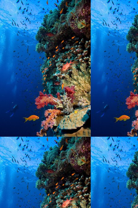Vinylová Tapeta Foto korálové kolonie - Témata