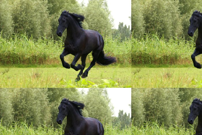 Vinylová Tapeta Fríský kůň - Témata