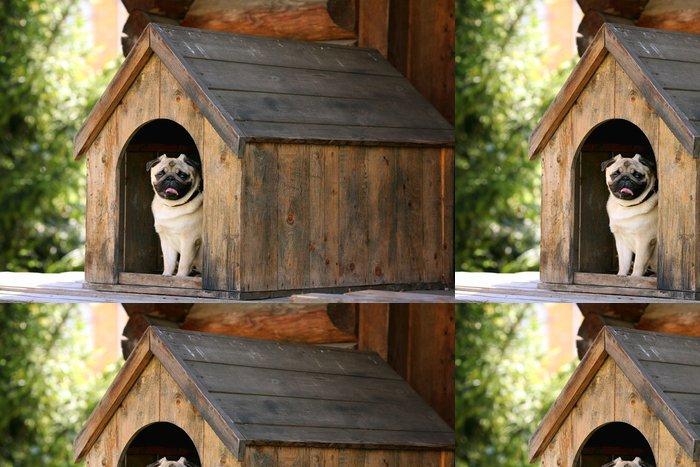 Tapeta Pixerstick Funny mops pes do psí boudy - Savci