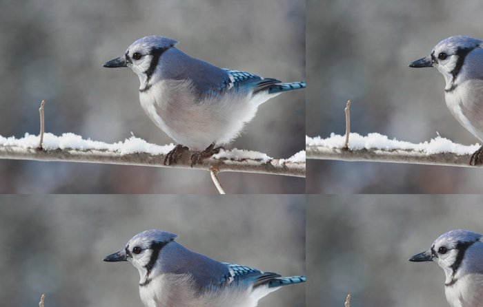Tapeta Pixerstick Geai bleu en hiver - Roční období