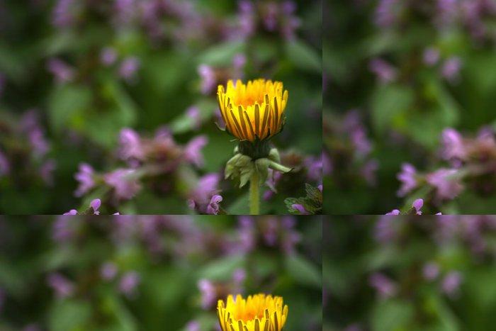 Tapeta Pixerstick Gelb v lila - Květiny