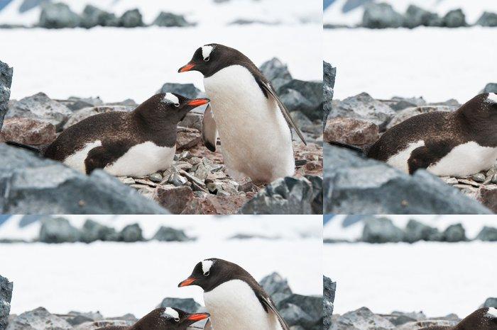 Vinylová Tapeta Gentoo tučňáci na hnízdě - Severní a jižní pól