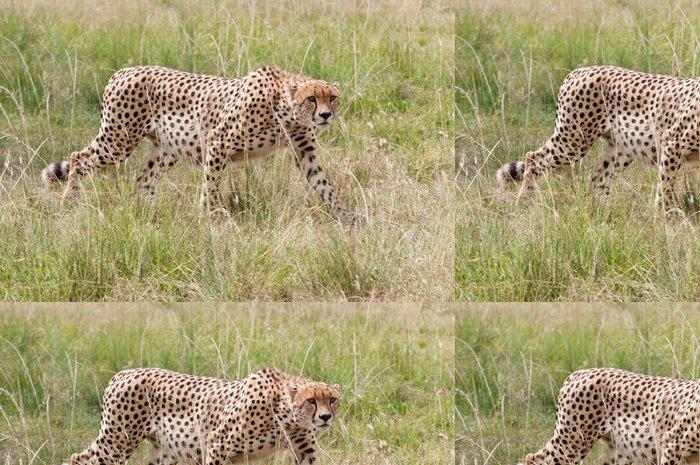 Tapeta Pixerstick Gepard chůze ve vysoké trávě - národní park Masai Mara - Savci