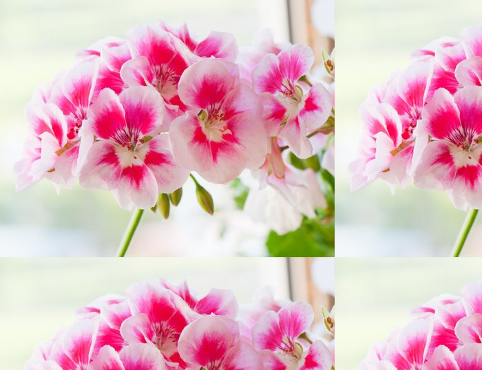 Tapeta Pixerstick Geranium květiny, close-up - Květiny