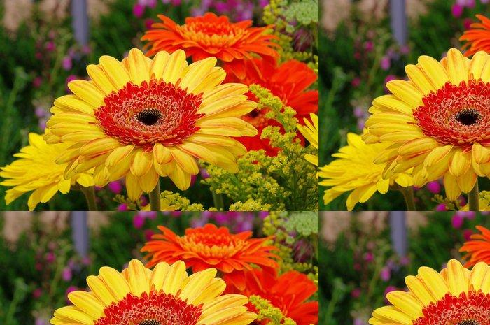 Tapeta Pixerstick Gerbera 23 - Květiny