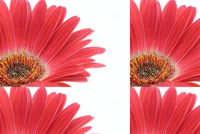 Tapeta Pixerstick Gerbera - Květiny