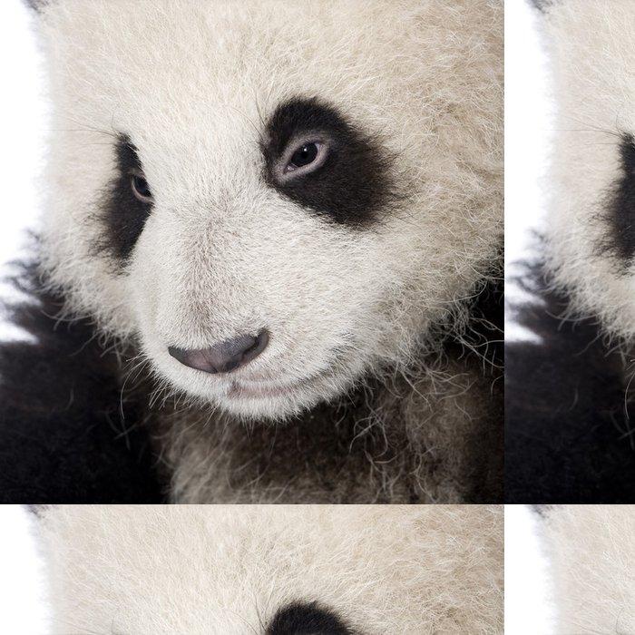 Tapeta Pixerstick Giant Panda (6 měsíců) - Ailuropoda melanoleuca - Témata