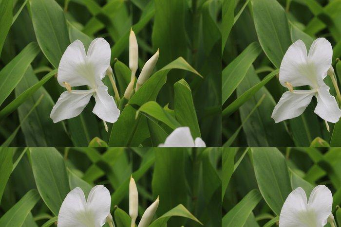 Tapeta Pixerstick Ginger Lily květ a pupen, motýl Ginger - Květiny