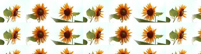 Tapeta Pixerstick Girasoli - Heliantus - Květiny
