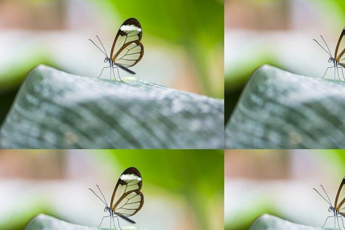 Tapeta Pixerstick Glasswing motýl - Greta Morgane oto - Ostatní Ostatní
