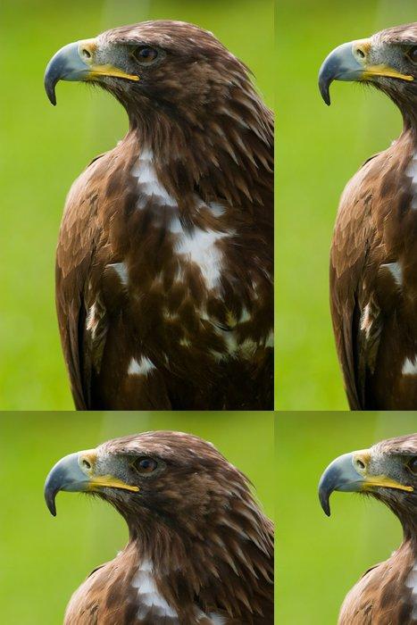 Tapeta Pixerstick Golden Eagle close-up - Témata