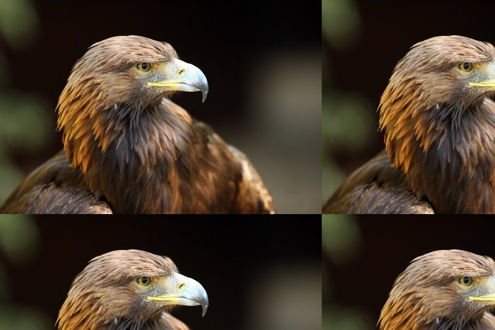 Tapeta Pixerstick Golden Eagle - Témata