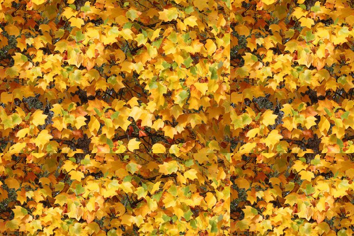 Tapeta Pixerstick Golden říjen - barevné listí - Roční období