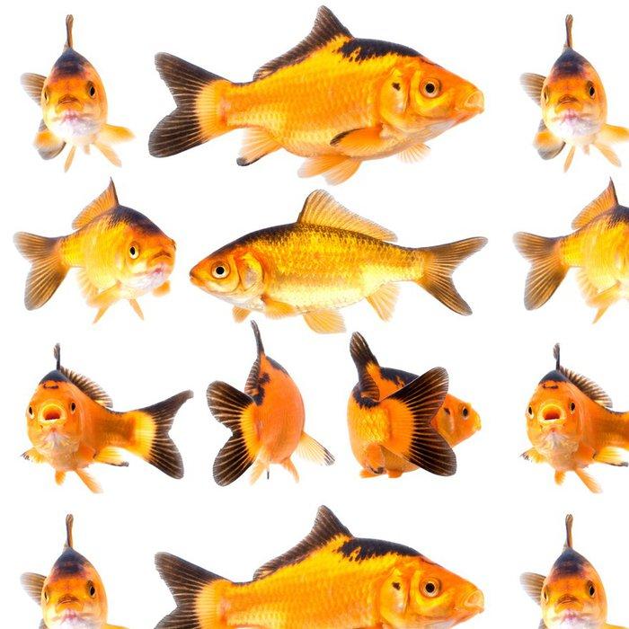 Tapeta Pixerstick Goldfishg - Přírodní krásy
