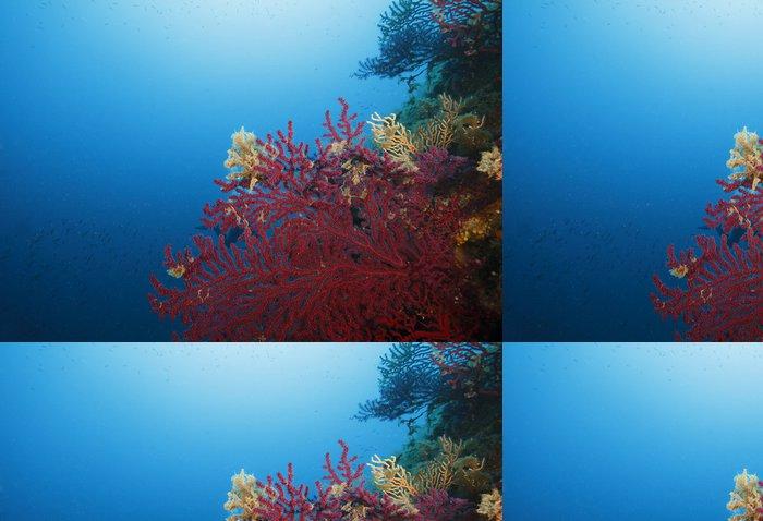 Tapeta Pixerstick Gorgonia rossa Acquario - Podvodní svět