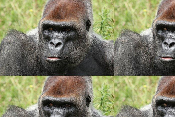 Tapeta Pixerstick Gorille des Plaines - Savci